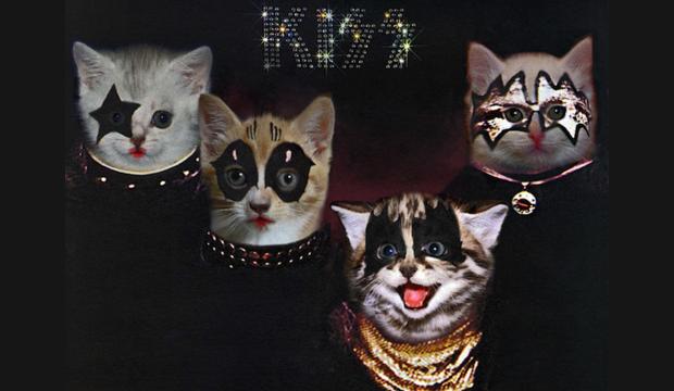 rockcats