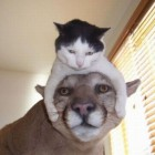 l-Cat-is-the-hat. (1)