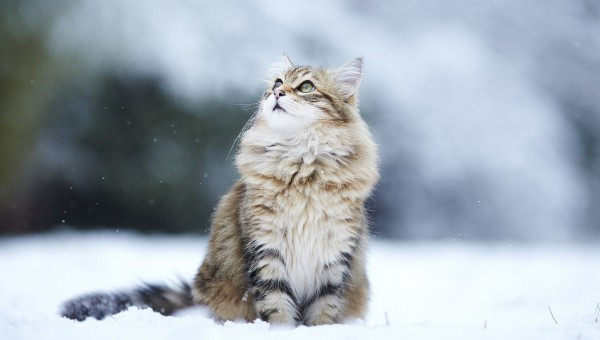 snow-winter-snowflakes-sweet-cat-wallpaper-1920x1200