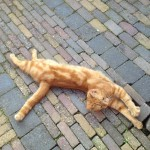Big Brother voor katten