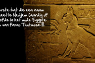 kattenfeit-egypte