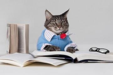 rsz_smart-cat_1
