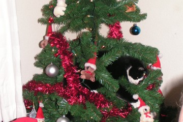 Elk jaar was de kerstboom de pineut .... alles wat je erin hing sloeg hij er met gemak eruit en was hij moe dan effe rustig in de nepboom slapen !!!