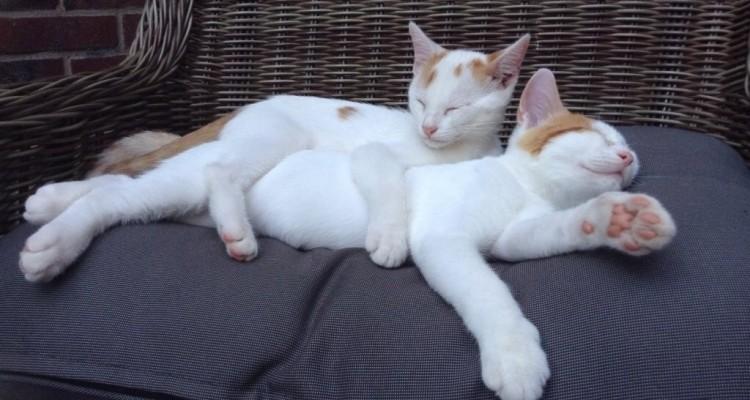 Ilja en Felle vinden elkaar lief!