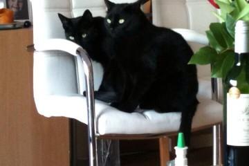 Lekker samen op de stoel