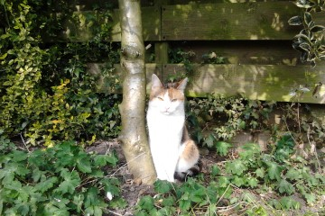 de jongste kat Kyra, 6 jaar heerlijk in de tuin