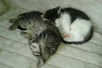 Max en Indy, broer en zus!
