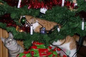 Mijn katten en de kerstboom, feest.