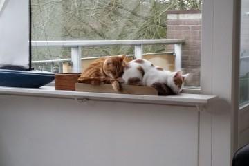 Treintje slapen in het bakje.