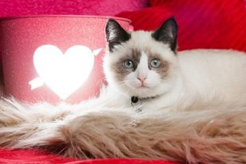 De liefde van de kat gaat door de
