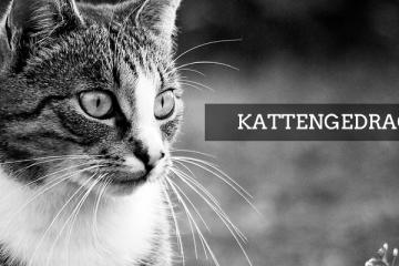 KATTENGEDRAG3