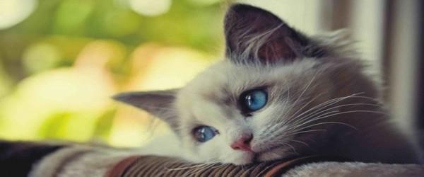 rsz_sad-cat-1