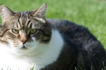 fat cat 2
