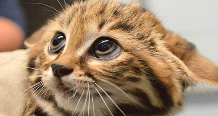 planten waar katten niet tegen kunnen