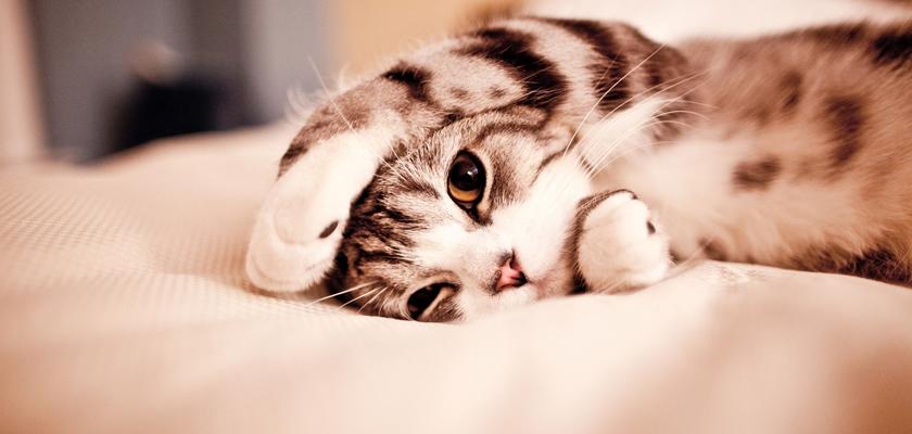 Is jouw huisinrichting kattenproof?
