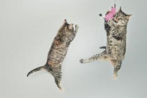 katten gaan uit huis