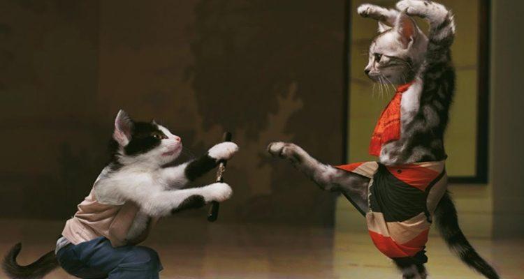 pokemon-katten