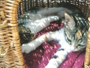 Irem en Miep liggen samen te dutten