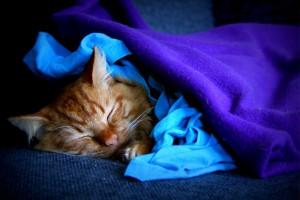 Rossi in diepe slaap