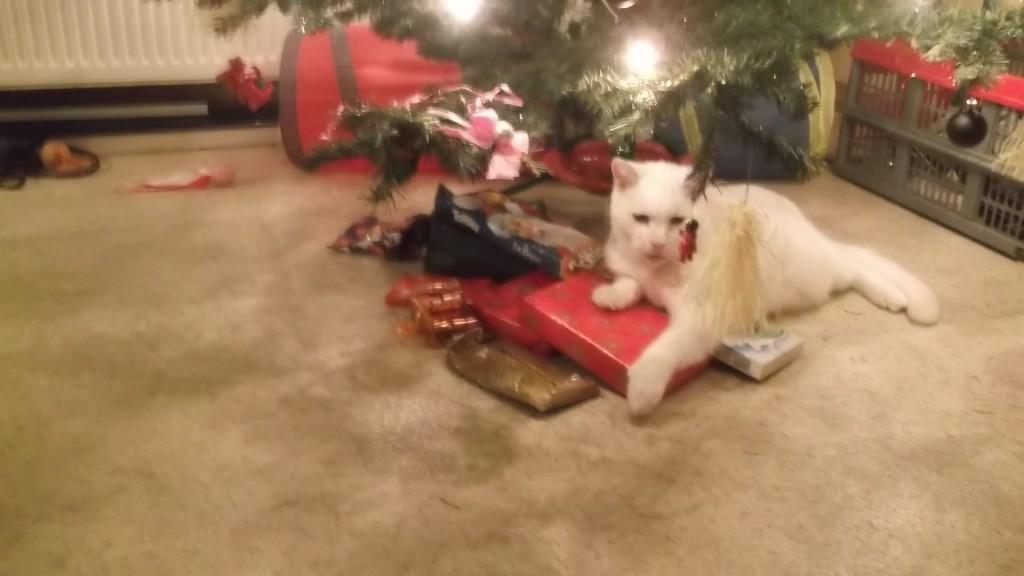 Babe bewaakt de kerst cadeautjes