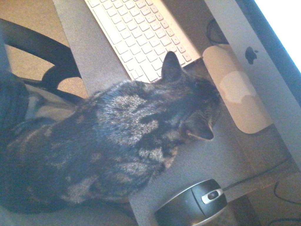 Chara gaat gewoon daar liggen waar de aandacht is, het toetsenbord!