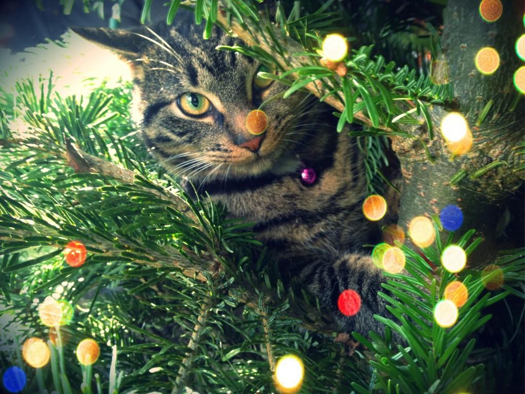 Muis' eerste kerst (ín de boom)