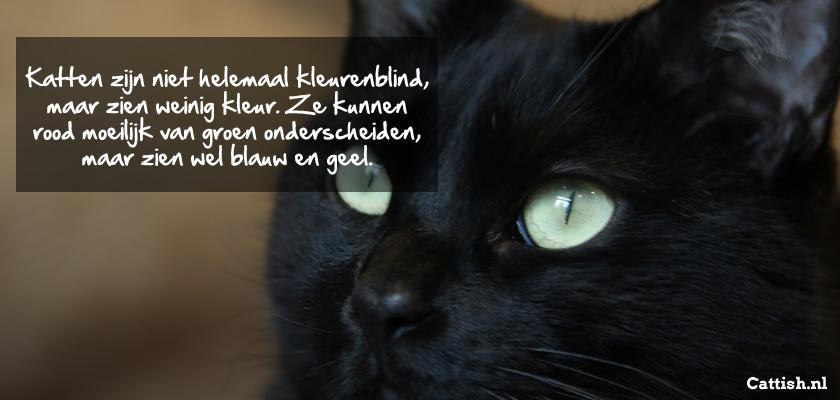 kattenfeit-kleurenblind