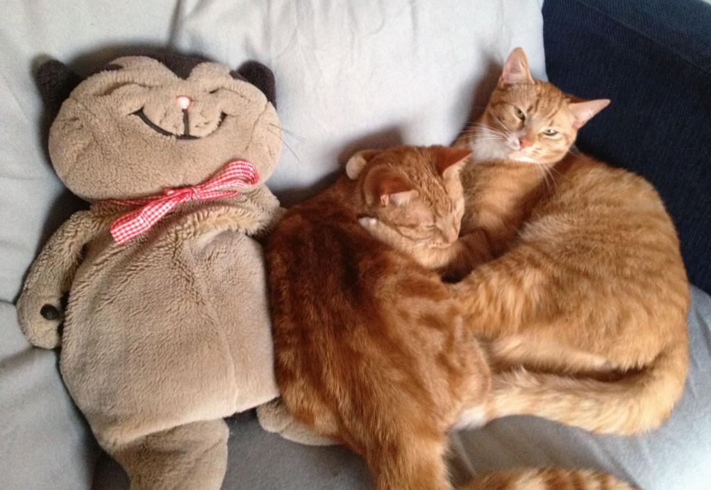 Waarom met zijn tweeën knuffelen, als het ook met zijn drieën kan?!