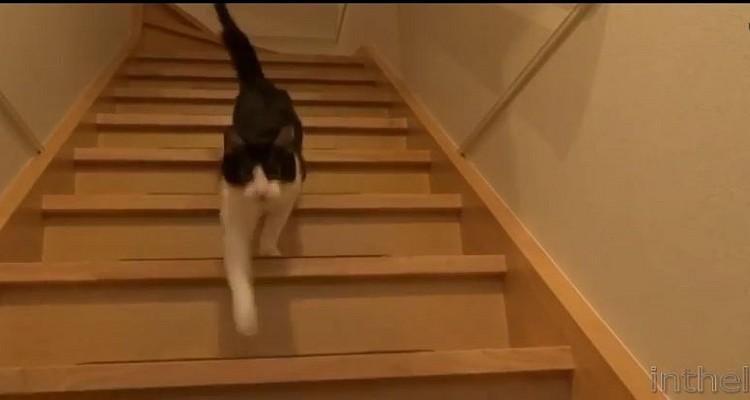Een kat mist je wel