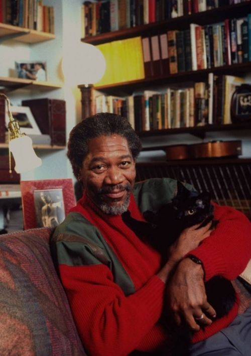 celebrities_and_cats_33