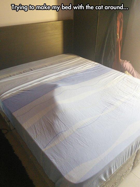 funny-cat-sheets-make-bed
