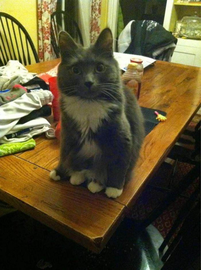 cats-sitting-down-funnily-drollnation-com-42591-700x936