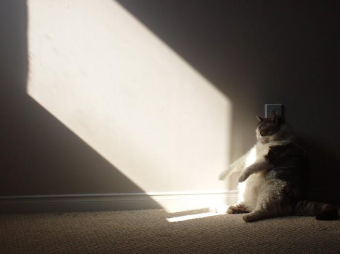 cats-sitting-down-funnily-drollnation-com-42604-700x524