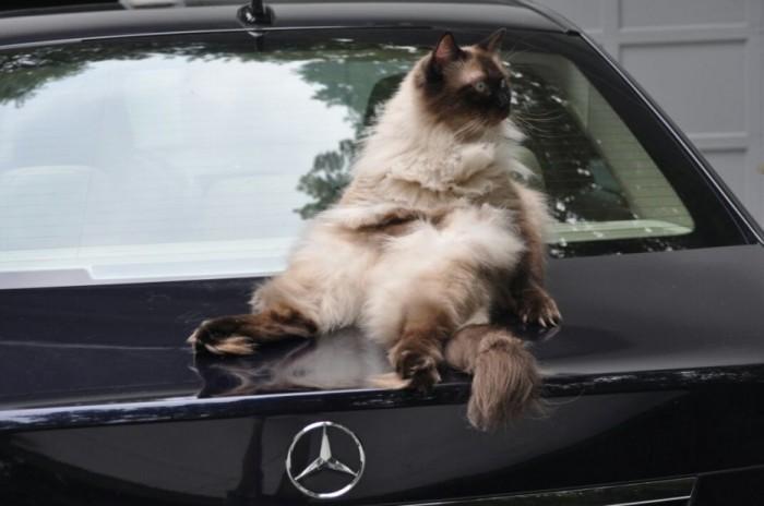 cats-sitting-down-funnily-drollnation-com-42615-700x464
