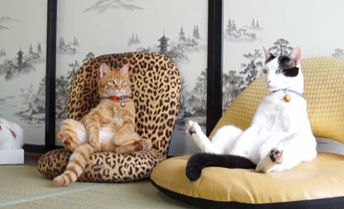 cats-sitting-down-funnily-drollnation-com-42618