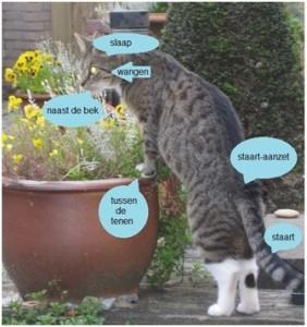 Je kat heeft heel veel geurklieren (foto:Ada)