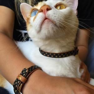 friendship collar