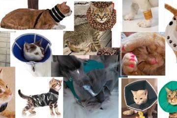 alternatieven voor lampenkap kraag kat