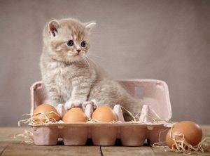 zalmeiersalade-voor-katten