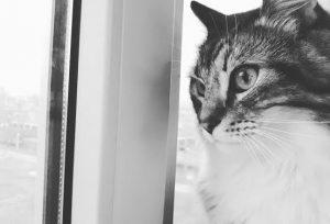kattenoppas