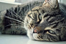 wel een kat