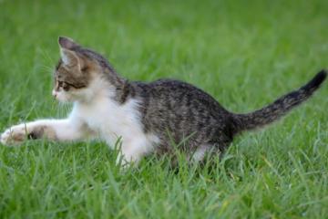 ontwormen-kat-gezondheid
