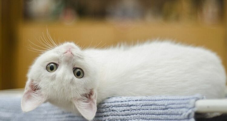 kattennaam