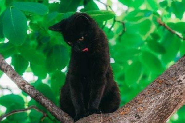 zwarte-kat-ongeluk