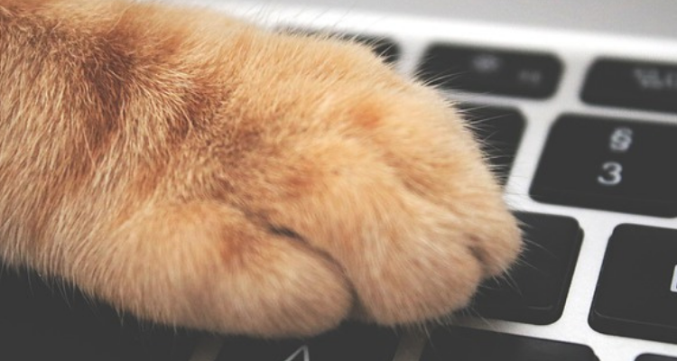 kat-toetsenbord